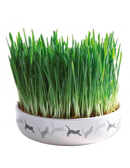 Comedero cerámico con hierba gatera