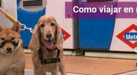 ¿Cómo acceder al metro y tren con tu perro?