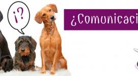 Comunicación con los perros