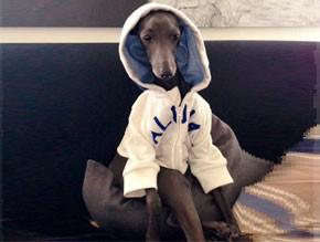Perro descansando en sillón con chauqeta de capucha